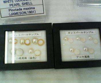真珠勉強会